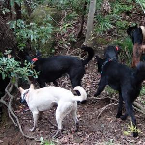 猟犬と血筋と猟隊と