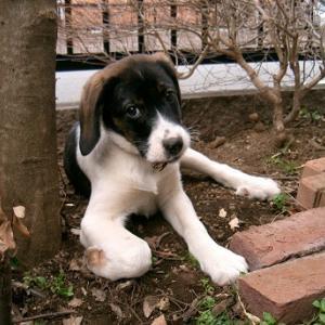 和犬か洋犬か