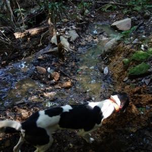若犬との山散歩