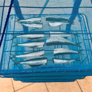 スーパーで魚の干物を買えなくなるほど自家製干物は激ウマだと言いたい