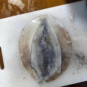 第二回 能登のアオリイカを釣って食べよう会(食事編)