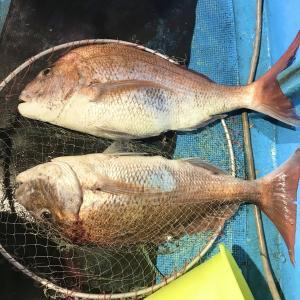 これは教えたくなかった…アカイカ釣りに潜む化け物