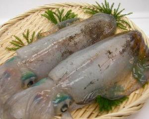 第3回能登のアオリイカを釣って食べよう会の公募