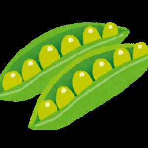 インゲン豆の成長~家庭菜園2020年5月第3週