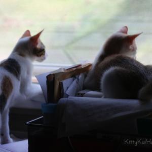 猫の乗っかり合い