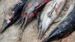 カムチャツカの海の生物95%が死滅 汚染原因を探る