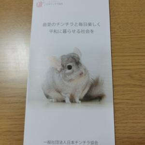 「日本チンチラ協会」って知ってる?