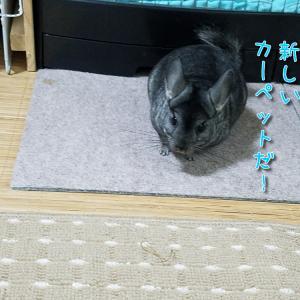 新しいカーペット