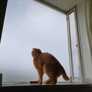 出窓から・・・