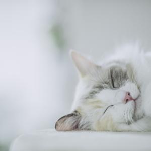 妊活するなら猫になれ?妊娠するには疲れすぎている日本女性