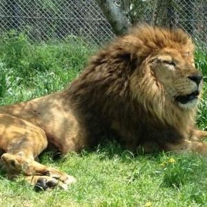 ライオンのおやつ 感想