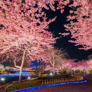 なばなの里♪一番おススメな時期をお教えします♪(イルミネーション、桜、チューリップ同時に見れる次期♪)