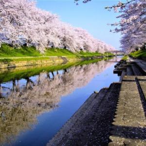 岐阜県各務原市の桜まつり紹介(日本の桜名所100選)