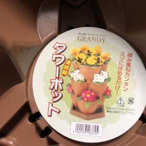 モモちゃんルルちゃんを植えてみました( *´艸`)