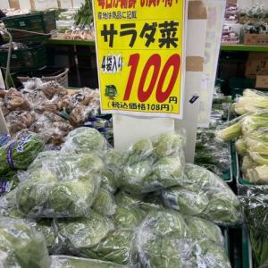 野菜の安い時期になりました♪