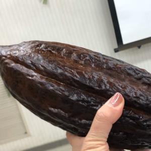 カカオ豆からチョコレート(チョコのお話②)