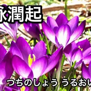 土脉潤起(立春末候)