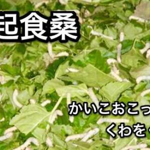 蚕起食桑(小満初候)