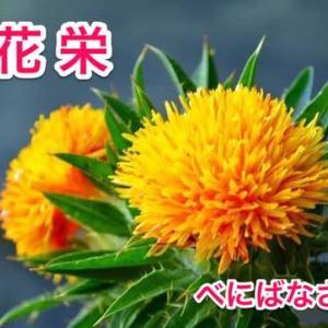紅花栄(小満次候)