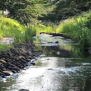 真夏の水辺