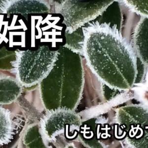 霜始降(霜降初候)