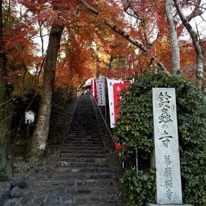 人生に迷ったら鈴虫寺に行く