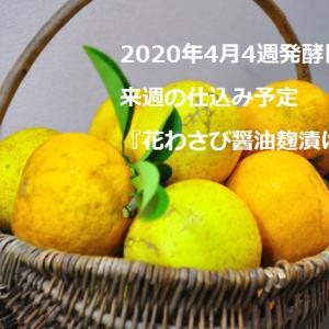 2020年4月4週発酵日記と来週の仕込み予定:花わさび醤油麹漬け
