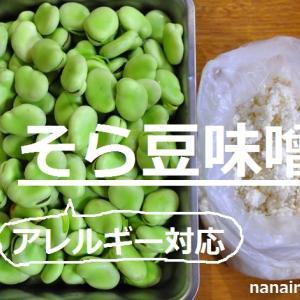 【自家製発酵調味料】今が旬!生のそら豆で味噌作り/アレルギー対応