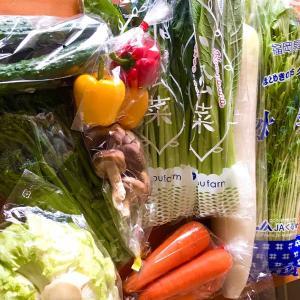 お野菜パラダイス