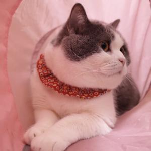 猫壱のキャットトンネルが大好き♡