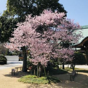 お花見イベント+HSP交流会【須磨寺公園】アクセス(兵庫県神戸市)