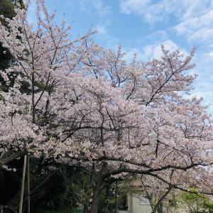 お花見+HSP交流会【リピーター限定イベント】2021年4月3日(土)