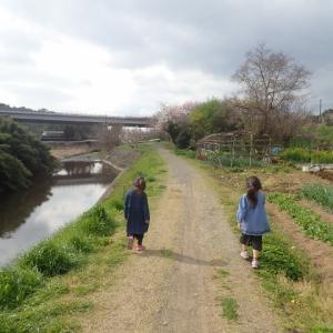 2020.3 春の花とお散歩