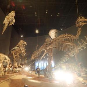 2020.7 神奈川県立生命の星地球博物館