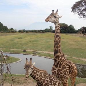 2020.10 九州の旅(15日目) ~ 鹿児島市平川動物公園 ・トレーラーの修理は鹿児島で~