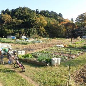 2020.11 サツマイモ掘り ~ 畑のおじいさんありがとう! ~