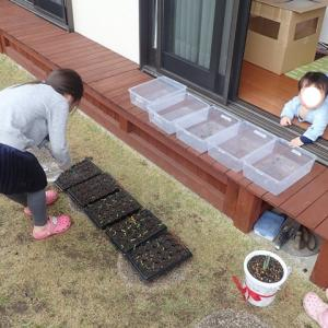 2021.3 夏野菜の準備 ~ 種苗 ~