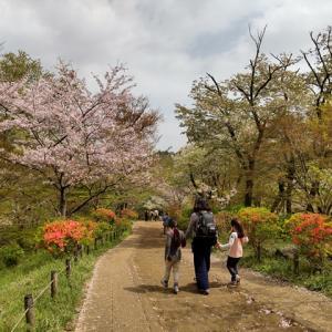 2021.4 弘法山 ~ 桜満開の山歩き ~