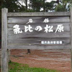 久しぶりに松原公園内を歩く