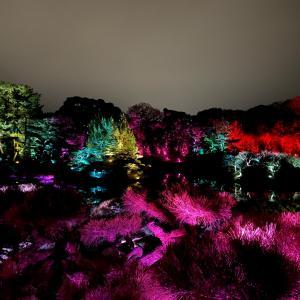 チームラボが千葉アート祭に!光の祭のアクセスや駐車場についてご紹介