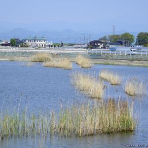 水田地帯にある遊水池