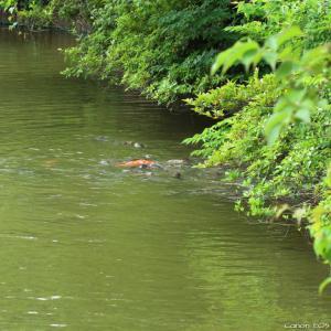 その他いきもの|大池親水公園