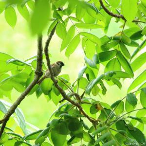 鳥&蝶|多々良沼公園