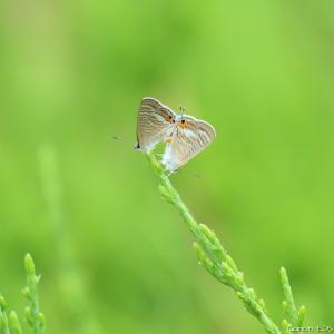 森林公園で撮った蝶10種