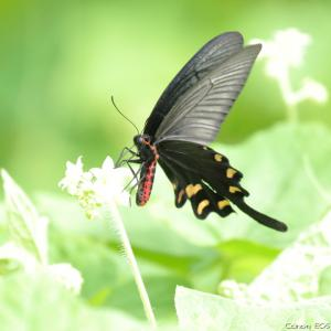 昆虫|小山市下生井