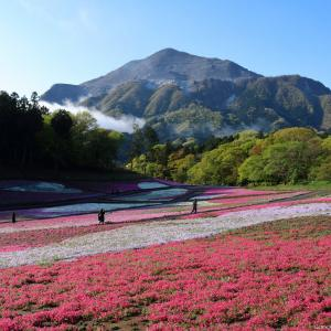 芝桜の丘 2021|羊山公園