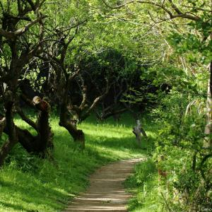 ぶらっと散歩|北本自然観察公園