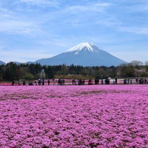 富士芝桜まつり 2021 1/2