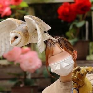 バードショー1|富士花鳥園