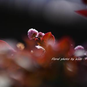足元に ひっそりと咲くヒメツルソバ(姫蔓蕎麦)